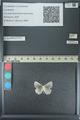 http://mczbase.mcz.harvard.edu/specimen_images/ent-lepidoptera/images/2013_04_16/IMG_141682.JPG