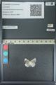 http://mczbase.mcz.harvard.edu/specimen_images/ent-lepidoptera/images/2013_04_16/IMG_141683.JPG