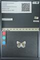 http://mczbase.mcz.harvard.edu/specimen_images/ent-lepidoptera/images/2013_04_16/IMG_141684.JPG