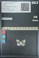 http://mczbase.mcz.harvard.edu/specimen_images/ent-lepidoptera/images/2013_04_16/IMG_141685.JPG