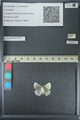 http://mczbase.mcz.harvard.edu/specimen_images/ent-lepidoptera/images/2013_04_16/IMG_141686.JPG