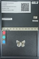 http://mczbase.mcz.harvard.edu/specimen_images/ent-lepidoptera/images/2013_04_16/IMG_141687.JPG