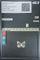 http://mczbase.mcz.harvard.edu/specimen_images/ent-lepidoptera/images/2013_04_16/IMG_141688.JPG