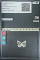 http://mczbase.mcz.harvard.edu/specimen_images/ent-lepidoptera/images/2013_04_16/IMG_141690.JPG