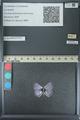 http://mczbase.mcz.harvard.edu/specimen_images/ent-lepidoptera/images/2013_04_16/IMG_141691.JPG