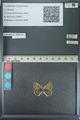 http://mczbase.mcz.harvard.edu/specimen_images/ent-lepidoptera/images/2013_04_16/IMG_141693.JPG