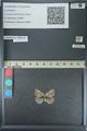 http://mczbase.mcz.harvard.edu/specimen_images/ent-lepidoptera/images/2013_04_16/IMG_141694.JPG