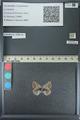 http://mczbase.mcz.harvard.edu/specimen_images/ent-lepidoptera/images/2013_04_16/IMG_141696.JPG