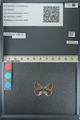 http://mczbase.mcz.harvard.edu/specimen_images/ent-lepidoptera/images/2013_04_16/IMG_141698.JPG