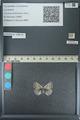 http://mczbase.mcz.harvard.edu/specimen_images/ent-lepidoptera/images/2013_04_16/IMG_141699.JPG