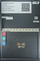 http://mczbase.mcz.harvard.edu/specimen_images/ent-lepidoptera/images/2013_04_16/IMG_141700.JPG