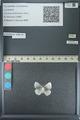 http://mczbase.mcz.harvard.edu/specimen_images/ent-lepidoptera/images/2013_04_16/IMG_141702.JPG