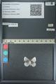 http://mczbase.mcz.harvard.edu/specimen_images/ent-lepidoptera/images/2013_04_16/IMG_141705.JPG