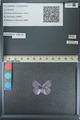 http://mczbase.mcz.harvard.edu/specimen_images/ent-lepidoptera/images/2013_04_16/IMG_141707.JPG