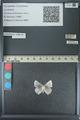 http://mczbase.mcz.harvard.edu/specimen_images/ent-lepidoptera/images/2013_04_16/IMG_141711.JPG