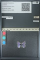 http://mczbase.mcz.harvard.edu/specimen_images/ent-lepidoptera/images/2013_04_16/IMG_141713.JPG