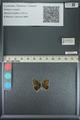 http://mczbase.mcz.harvard.edu/specimen_images/ent-lepidoptera/images/2013_04_17/IMG_141844.JPG