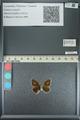 http://mczbase.mcz.harvard.edu/specimen_images/ent-lepidoptera/images/2013_04_17/IMG_141845.JPG