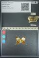 http://mczbase.mcz.harvard.edu/specimen_images/ent-lepidoptera/images/2013_04_17/IMG_141886.JPG