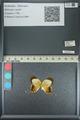 http://mczbase.mcz.harvard.edu/specimen_images/ent-lepidoptera/images/2013_04_17/IMG_141887.JPG