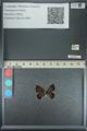 http://mczbase.mcz.harvard.edu/specimen_images/ent-lepidoptera/images/2013_04_17/IMG_141889.JPG