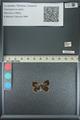http://mczbase.mcz.harvard.edu/specimen_images/ent-lepidoptera/images/2013_04_17/IMG_141890.JPG