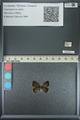 http://mczbase.mcz.harvard.edu/specimen_images/ent-lepidoptera/images/2013_04_17/IMG_141891.JPG