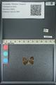 http://mczbase.mcz.harvard.edu/specimen_images/ent-lepidoptera/images/2013_04_17/IMG_141892.JPG