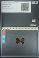 http://mczbase.mcz.harvard.edu/specimen_images/ent-lepidoptera/images/2013_04_17/IMG_141894.JPG