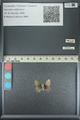 http://mczbase.mcz.harvard.edu/specimen_images/ent-lepidoptera/images/2013_04_18/IMG_141916.JPG