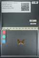 http://mczbase.mcz.harvard.edu/specimen_images/ent-lepidoptera/images/2013_04_18/IMG_141917.JPG