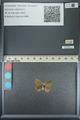 http://mczbase.mcz.harvard.edu/specimen_images/ent-lepidoptera/images/2013_04_18/IMG_141919.JPG