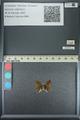 http://mczbase.mcz.harvard.edu/specimen_images/ent-lepidoptera/images/2013_04_18/IMG_141920.JPG