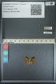 http://mczbase.mcz.harvard.edu/specimen_images/ent-lepidoptera/images/2013_04_18/IMG_141935.JPG