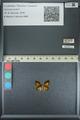 http://mczbase.mcz.harvard.edu/specimen_images/ent-lepidoptera/images/2013_04_18/IMG_141936.JPG
