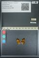http://mczbase.mcz.harvard.edu/specimen_images/ent-lepidoptera/images/2013_04_18/IMG_141937.JPG