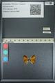 http://mczbase.mcz.harvard.edu/specimen_images/ent-lepidoptera/images/2013_04_18/IMG_141938.JPG