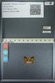 http://mczbase.mcz.harvard.edu/specimen_images/ent-lepidoptera/images/2013_04_18/IMG_141944.JPG