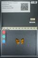 http://mczbase.mcz.harvard.edu/specimen_images/ent-lepidoptera/images/2013_04_18/IMG_141946.JPG