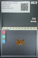 http://mczbase.mcz.harvard.edu/specimen_images/ent-lepidoptera/images/2013_04_22/IMG_141959.JPG