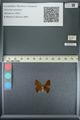 http://mczbase.mcz.harvard.edu/specimen_images/ent-lepidoptera/images/2013_04_22/IMG_141962.JPG