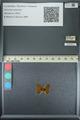 http://mczbase.mcz.harvard.edu/specimen_images/ent-lepidoptera/images/2013_04_22/IMG_141963.JPG