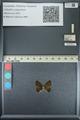 http://mczbase.mcz.harvard.edu/specimen_images/ent-lepidoptera/images/2013_04_22/IMG_141973.JPG