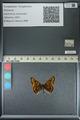 http://mczbase.mcz.harvard.edu/specimen_images/ent-lepidoptera/images/2013_04_24/IMG_142167.JPG