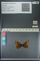 http://mczbase.mcz.harvard.edu/specimen_images/ent-lepidoptera/images/2013_04_24/IMG_142168.JPG