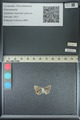 http://mczbase.mcz.harvard.edu/specimen_images/ent-lepidoptera/images/2013_04_24/IMG_142184.JPG