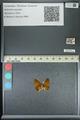 http://mczbase.mcz.harvard.edu/specimen_images/ent-lepidoptera/images/2013_04_26/IMG_142528.JPG