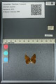http://mczbase.mcz.harvard.edu/specimen_images/ent-lepidoptera/images/2013_04_26/IMG_142531.JPG