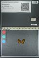 http://mczbase.mcz.harvard.edu/specimen_images/ent-lepidoptera/images/2013_04_26/IMG_142532.JPG