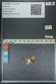 http://mczbase.mcz.harvard.edu/specimen_images/ent-lepidoptera/images/2013_04_26/IMG_142560.JPG
